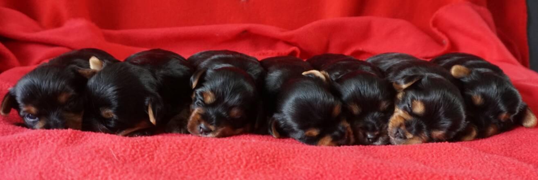 pupjes op een rij